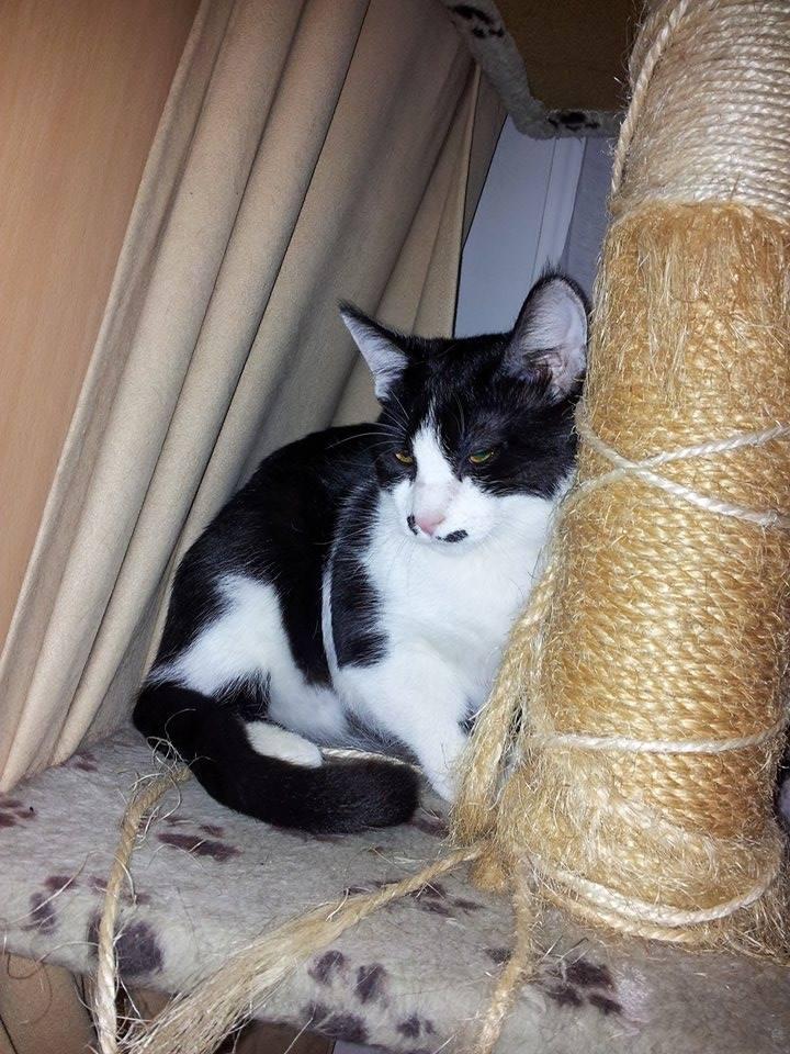 Mikado, noir et blanc, né en Mars 2014  10629810