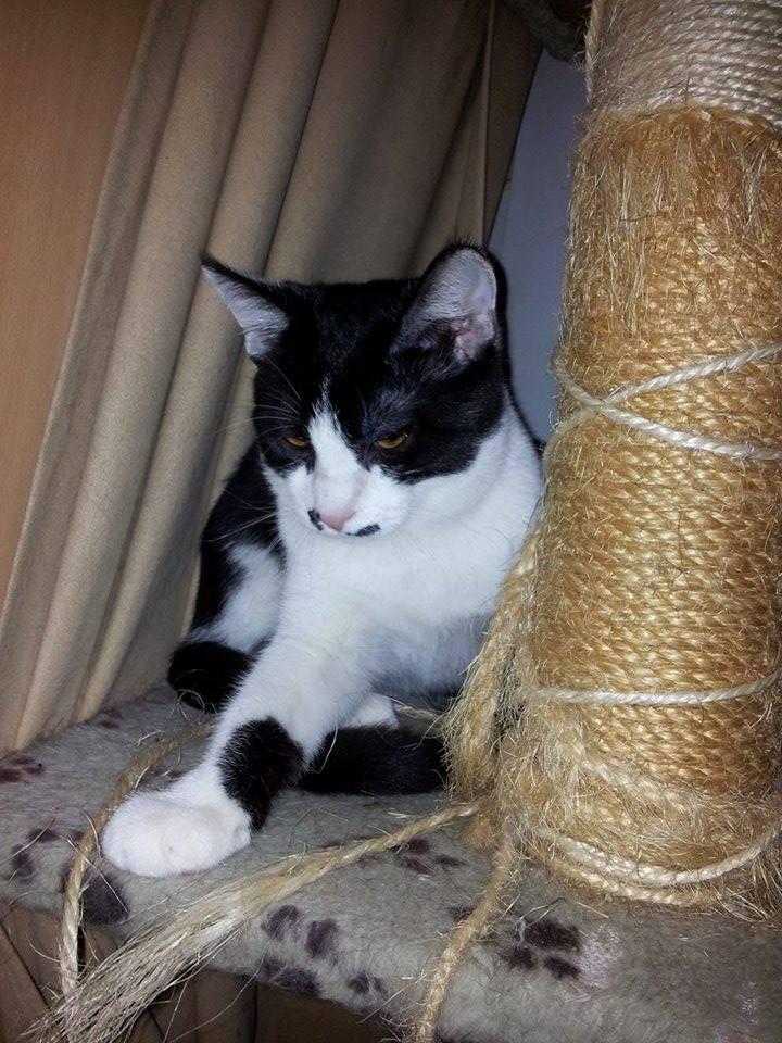 Mikado, noir et blanc, né en Mars 2014  15461210