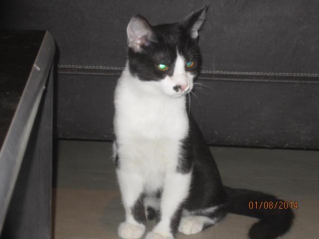 Mikado, noir et blanc, né en Mars 2014  Img_9413