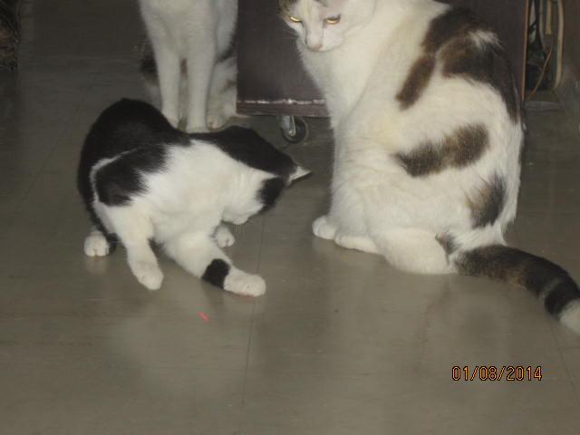 Mikado, noir et blanc, né en Mars 2014  Img_9416