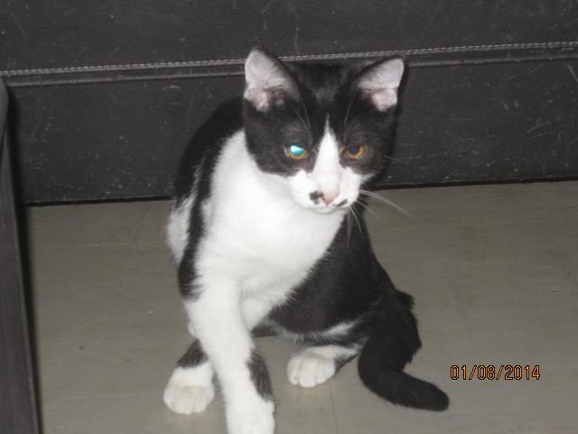 Mikado, noir et blanc, né en Mars 2014  Img_9422