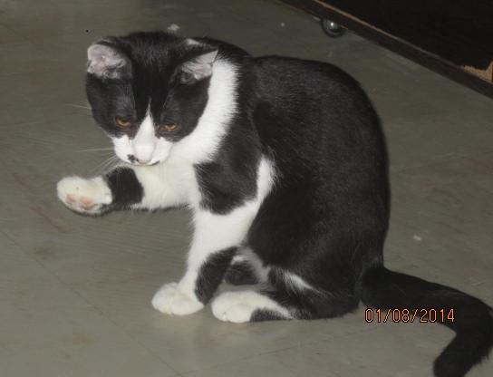 Mikado, noir et blanc, né en Mars 2014  Img_9423