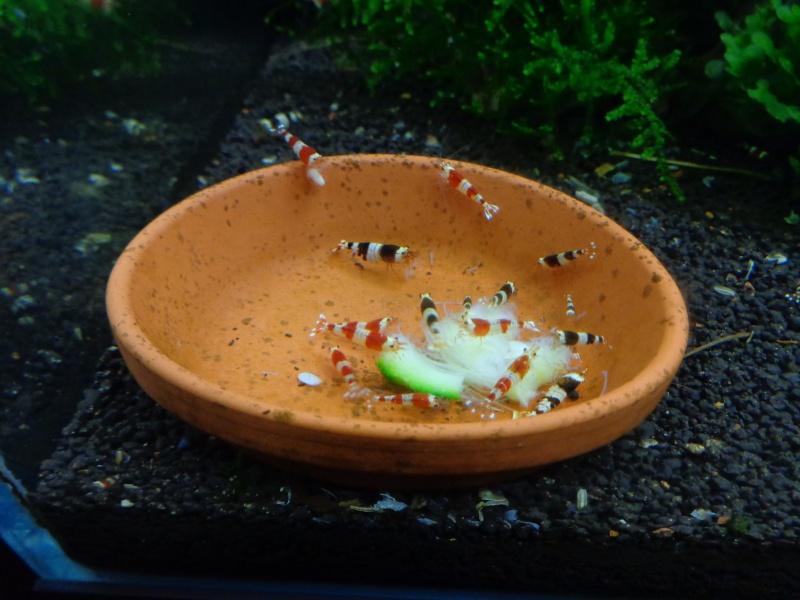 Shrimps made in Fanny Dsc02521