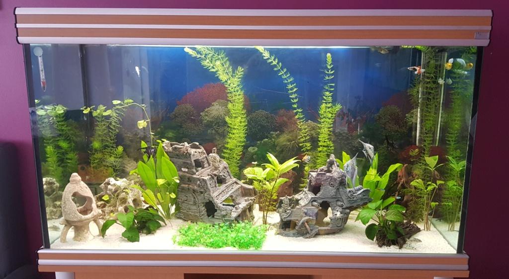 Nouvelle aquarium de 420 L 20190710