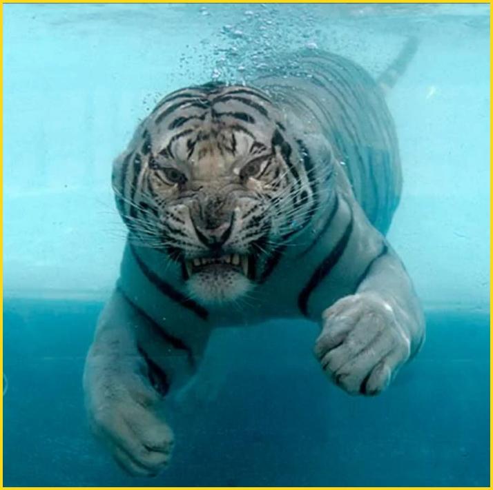 Ces animaux qui nous fascinent. 0414