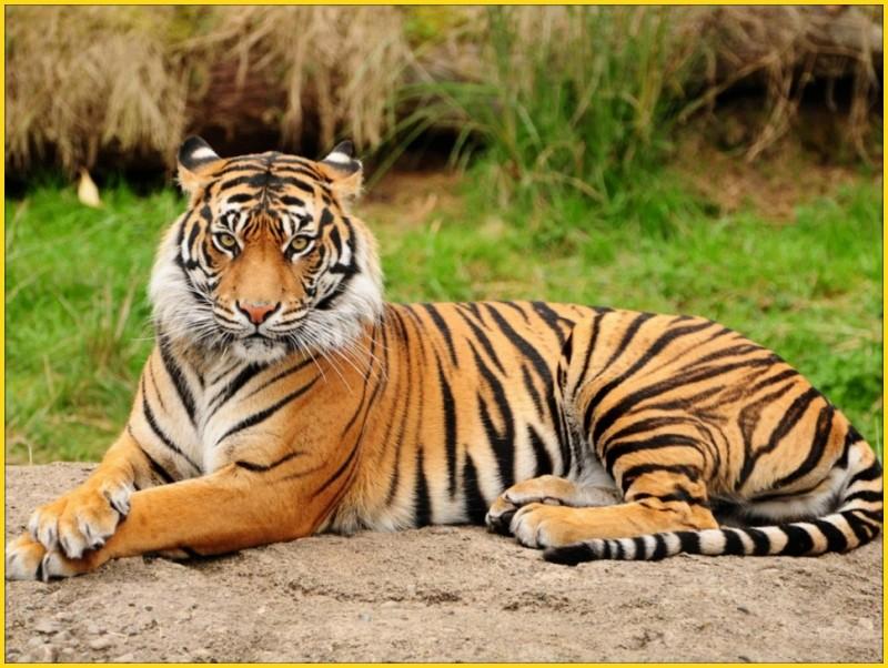 Ces animaux qui nous fascinent. 0711