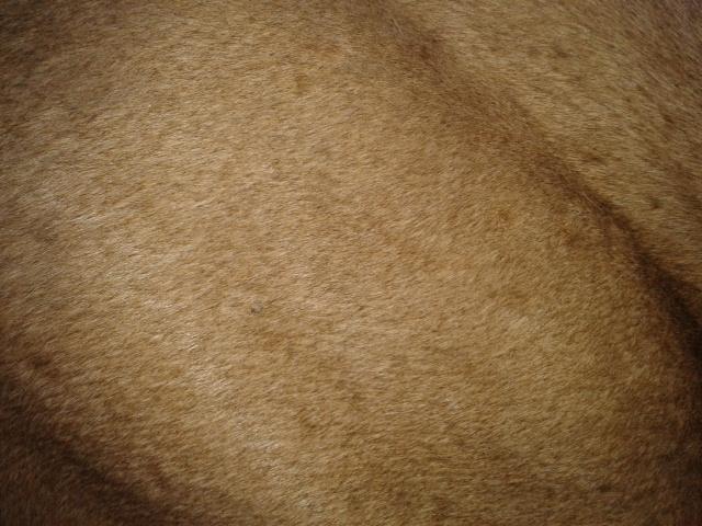 quelle évolution sur la couleur de mon poulain? 2014-011