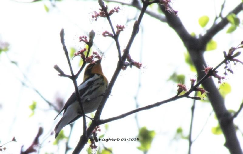 2 oiseaux à id s.v.p. Img_0311