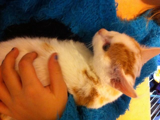 Lyly (ancienne Jakadi), femelle née le 1/09/2014 blanche tachetée de roux Img_0817