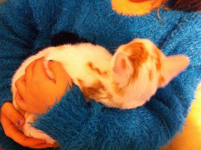 Lyly (ancienne Jakadi), femelle née le 1/09/2014 blanche tachetée de roux Img_0818