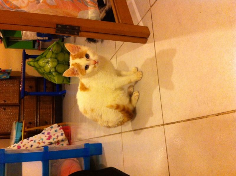 Lyly (ancienne Jakadi), femelle née le 1/09/2014 blanche tachetée de roux Img_0913