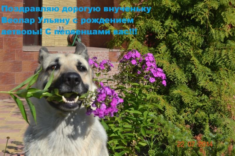 ВОСТОЧНО-ЕВРОПЕЙСКАЯ ОВЧАРКА ВЕОЛАР УЛЬЯНА - Страница 8 Dsc_0135