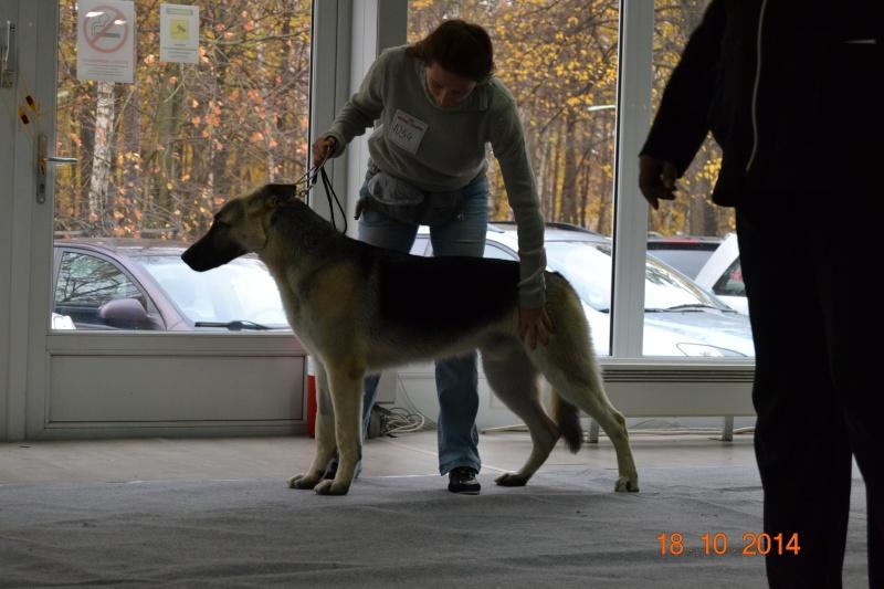 """VIP DOG ШОУ 2014"" 18.10.14 Dsc_0252"