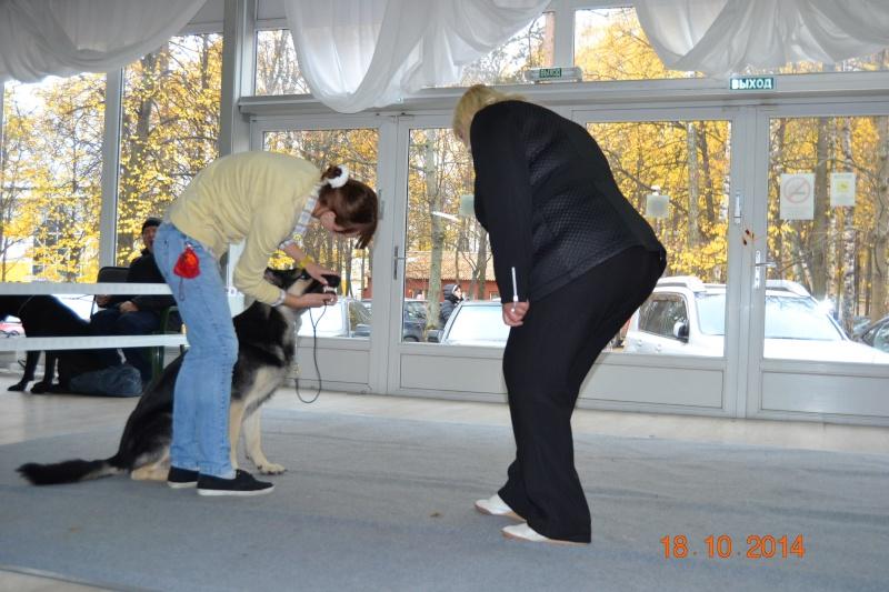 """VIP DOG ШОУ 2014"" 18.10.14 Dsc_0253"
