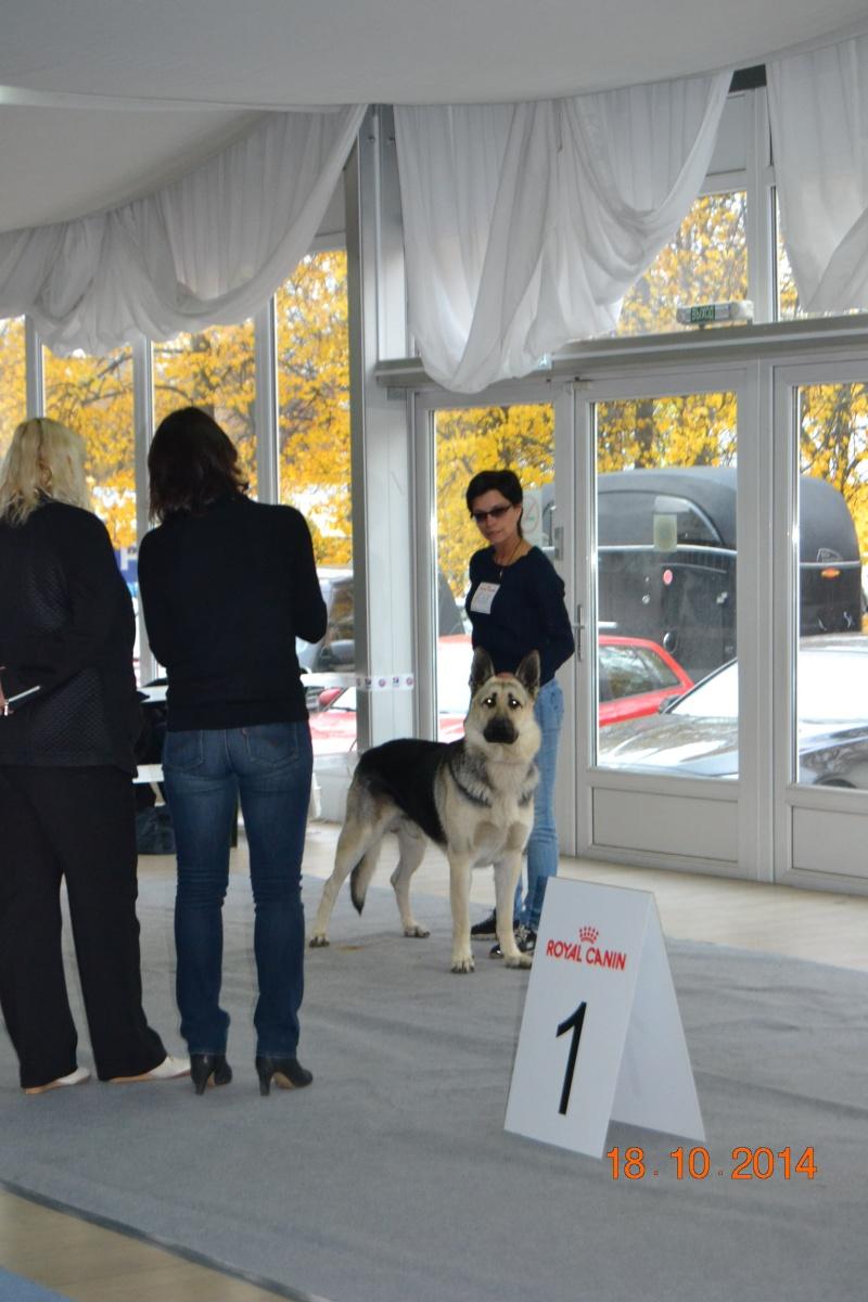 """VIP DOG ШОУ 2014"" 18.10.14 Dsc_0256"