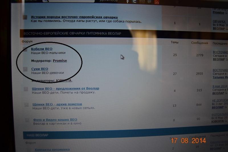ВОСТОЧНО-ЕВРОПЕЙСКАЯ ОВЧАРКА ВЕОЛАР ЕДЖЕССИКА Dsc_0331