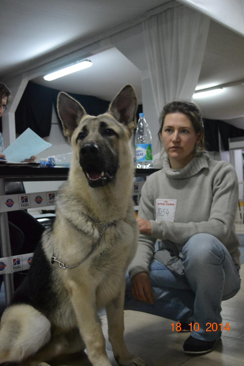 """VIP DOG ШОУ 2014"" 18.10.14 Dsc_0344"