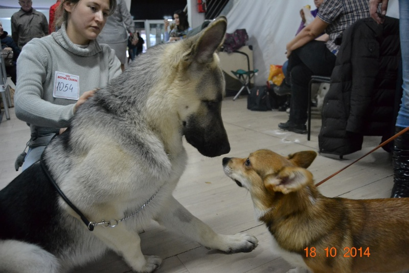 """VIP DOG ШОУ 2014"" 18.10.14 Dsc_0345"