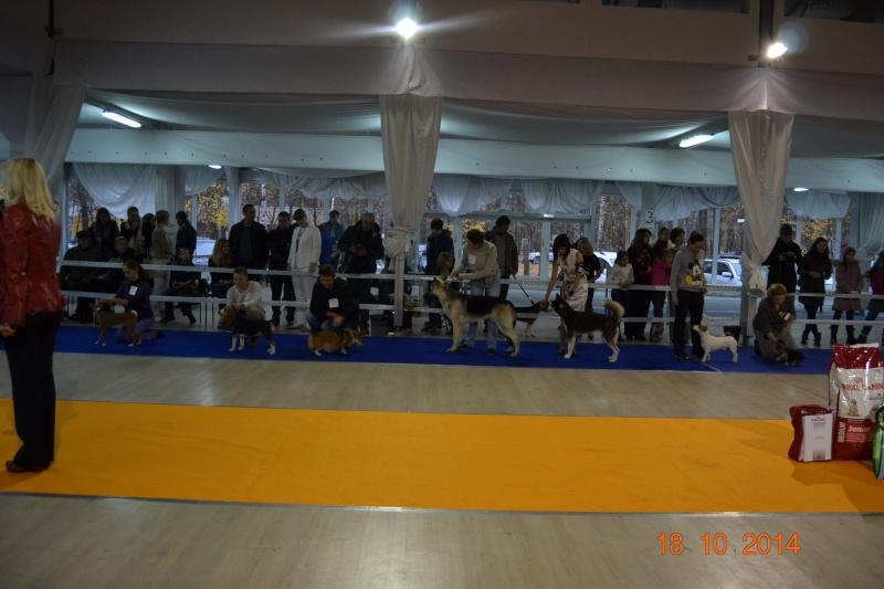 """VIP DOG ШОУ 2014"" 18.10.14 Dsc_0346"
