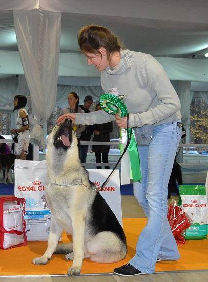 """VIP DOG ШОУ 2014"" 18.10.14 Dsc_0348"