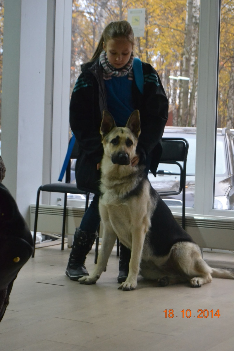 """VIP DOG ШОУ 2014"" 18.10.14 Dsc_0349"