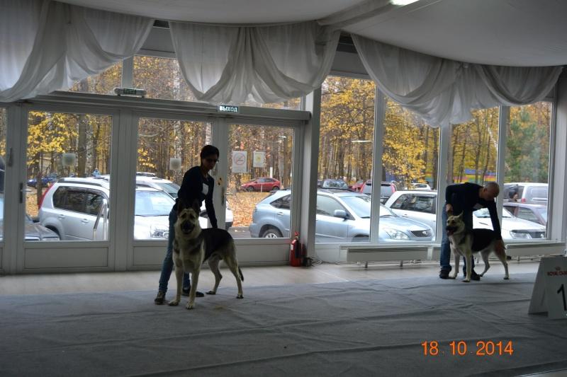 """VIP DOG ШОУ 2014"" 18.10.14 Dsc_0350"
