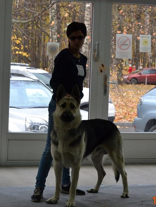 """VIP DOG ШОУ 2014"" 18.10.14 Dsc_0351"