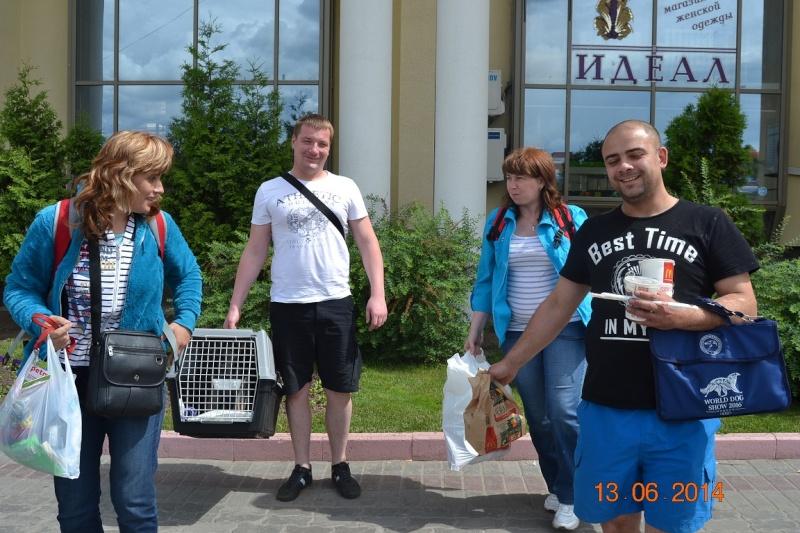 ВОСТОЧНО-ЕВРОПЕЙСКАЯ ОВЧАРКА ВЕОЛАР ДЕЯ БЛИЦ ХАЙДИ Dsc_0424