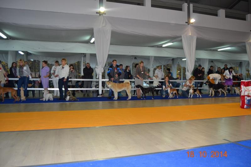 """VIP DOG ШОУ 2014"" 18.10.14 Dsc_0435"