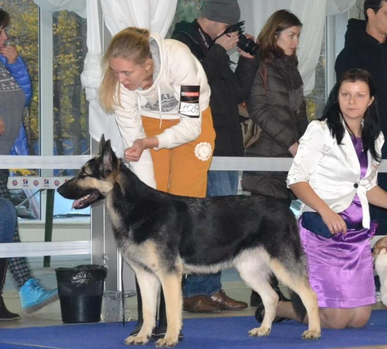 """VIP DOG ШОУ 2014"" 18.10.14 Dsc_0436"