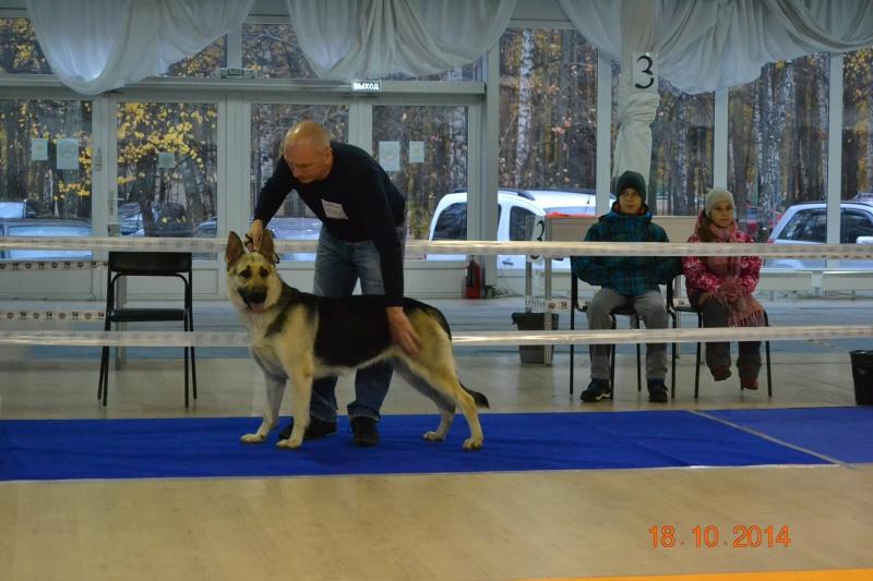 """VIP DOG ШОУ 2014"" 18.10.14 Dsc_0437"