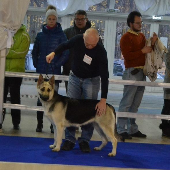 """VIP DOG ШОУ 2014"" 18.10.14 Dsc_0439"