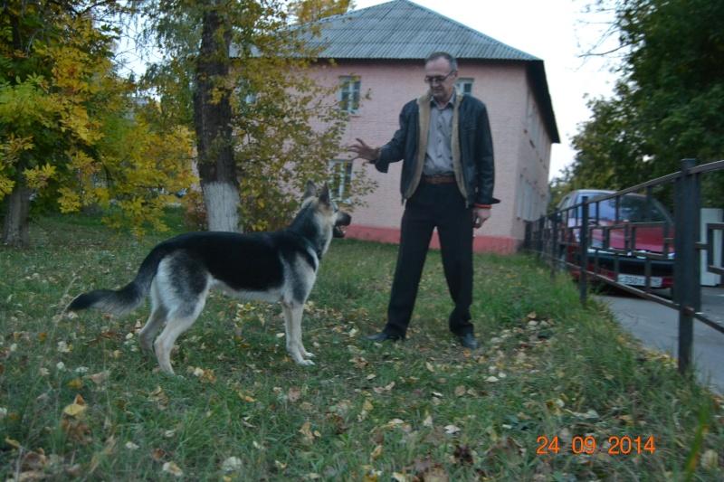 ВОСТОЧНО-ЕВРОПЕЙСКАЯ ОВЧАРКА ВЕОЛАР ГЕРДА Dsc_0836