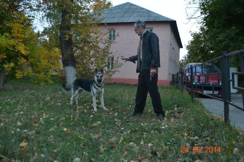 ВОСТОЧНО-ЕВРОПЕЙСКАЯ ОВЧАРКА ВЕОЛАР ГЕРДА Dsc_0837