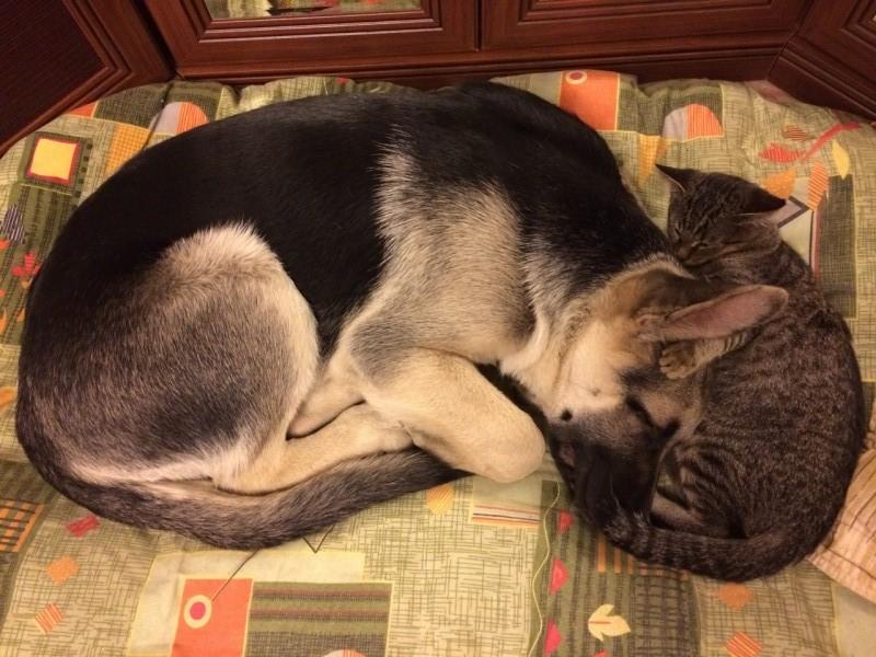Кот и Пёс. Как познакомить? E8ba4010
