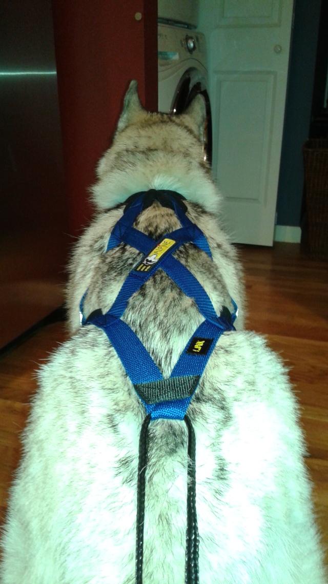 [Scrapbook] Link the Siberian Husky - Page 18 20141214