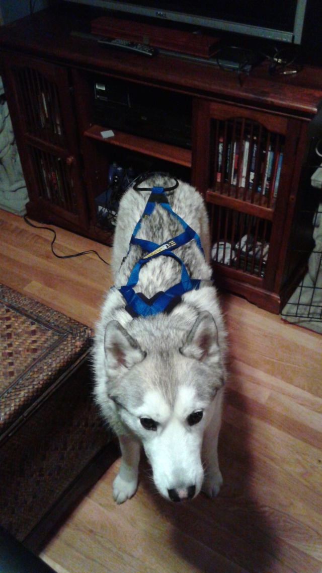 [Scrapbook] Link the Siberian Husky - Page 18 20141217
