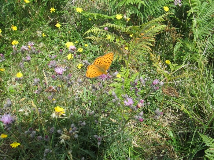 Le papillon de Goulien Img_0215