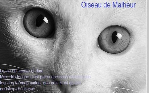 Reflet d'Ambre ~ 20 lunes ~ Guerrière Cat12