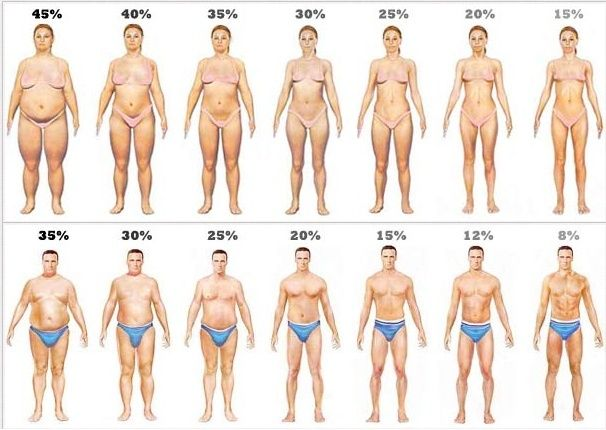 Normal body weight and height for adults Body_f10