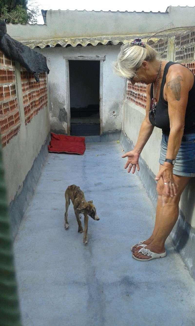 Zoé – Adorable galguita Scooby France –Adoptée !  Voyage10