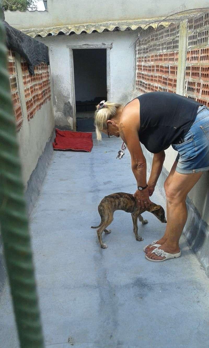 Zoé – Adorable galguita Scooby France –Adoptée !  Voyage11