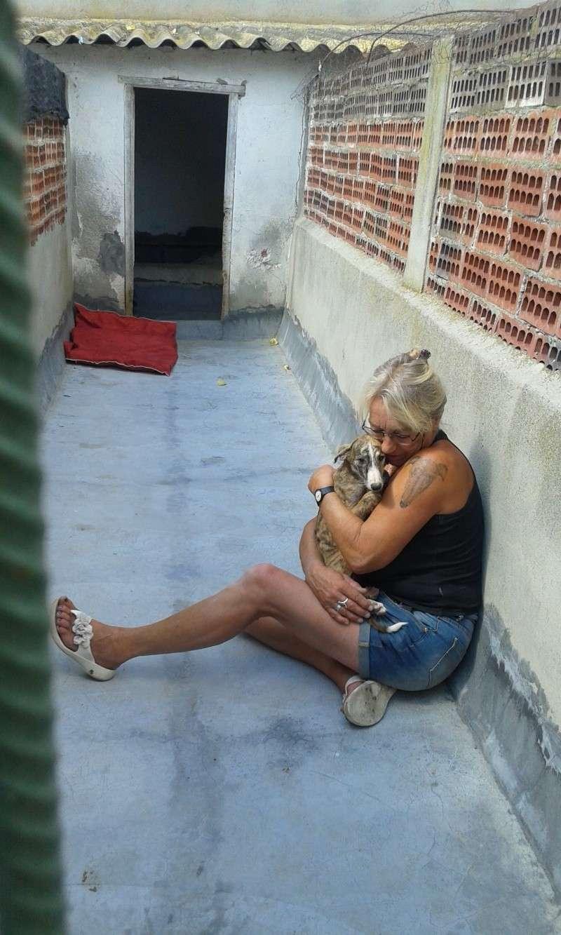 Zoé – Adorable galguita Scooby France –Adoptée !  Voyage15