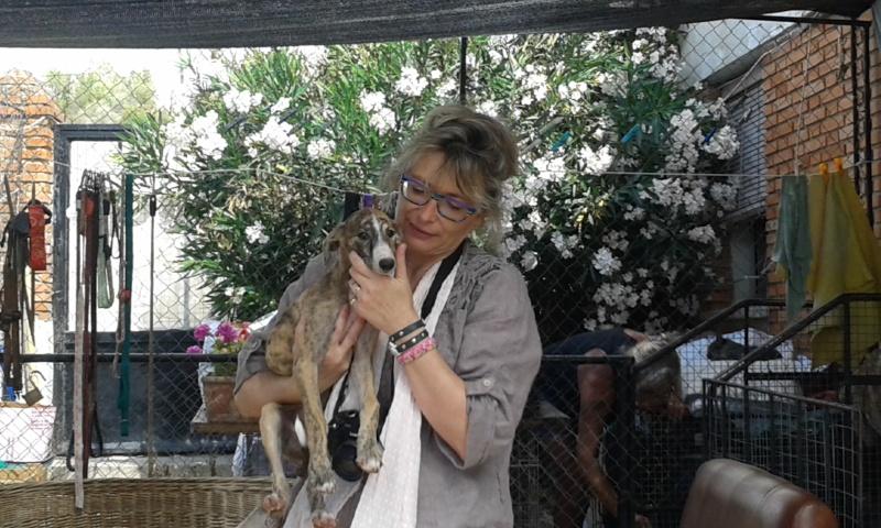 Zoé – Adorable galguita Scooby France –Adoptée !  Voyage18