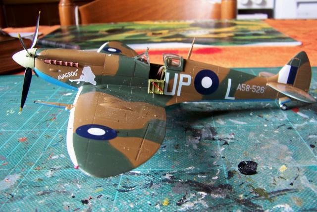 Spitfire Mk VIII > Morotaï étè 1945 (fini) - Page 2 100_8028