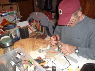 perte d'un petit chat mon ami Dsc00410