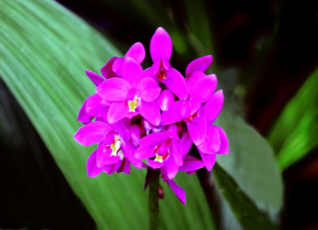 Une fleur mauve Quizz10