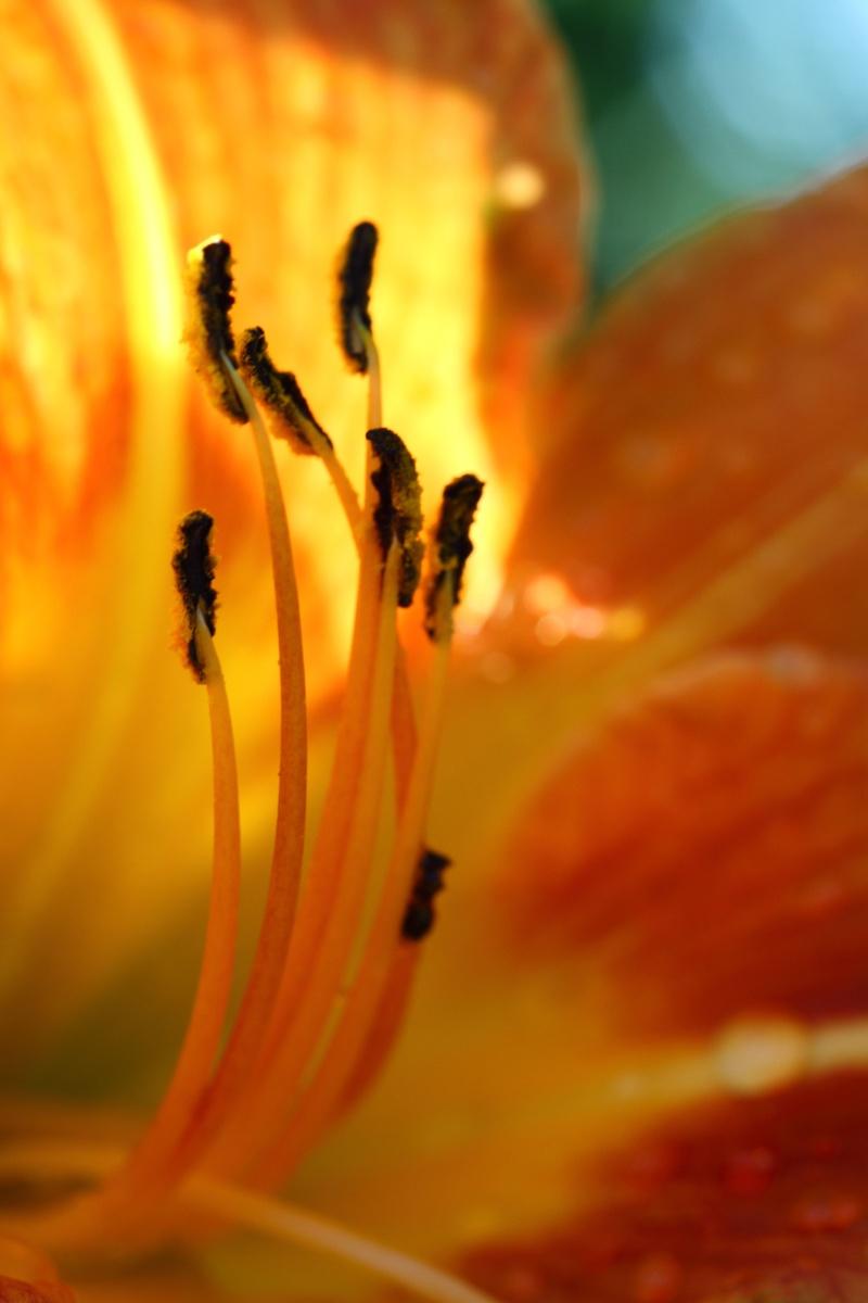 macro fleurs  Img_3211