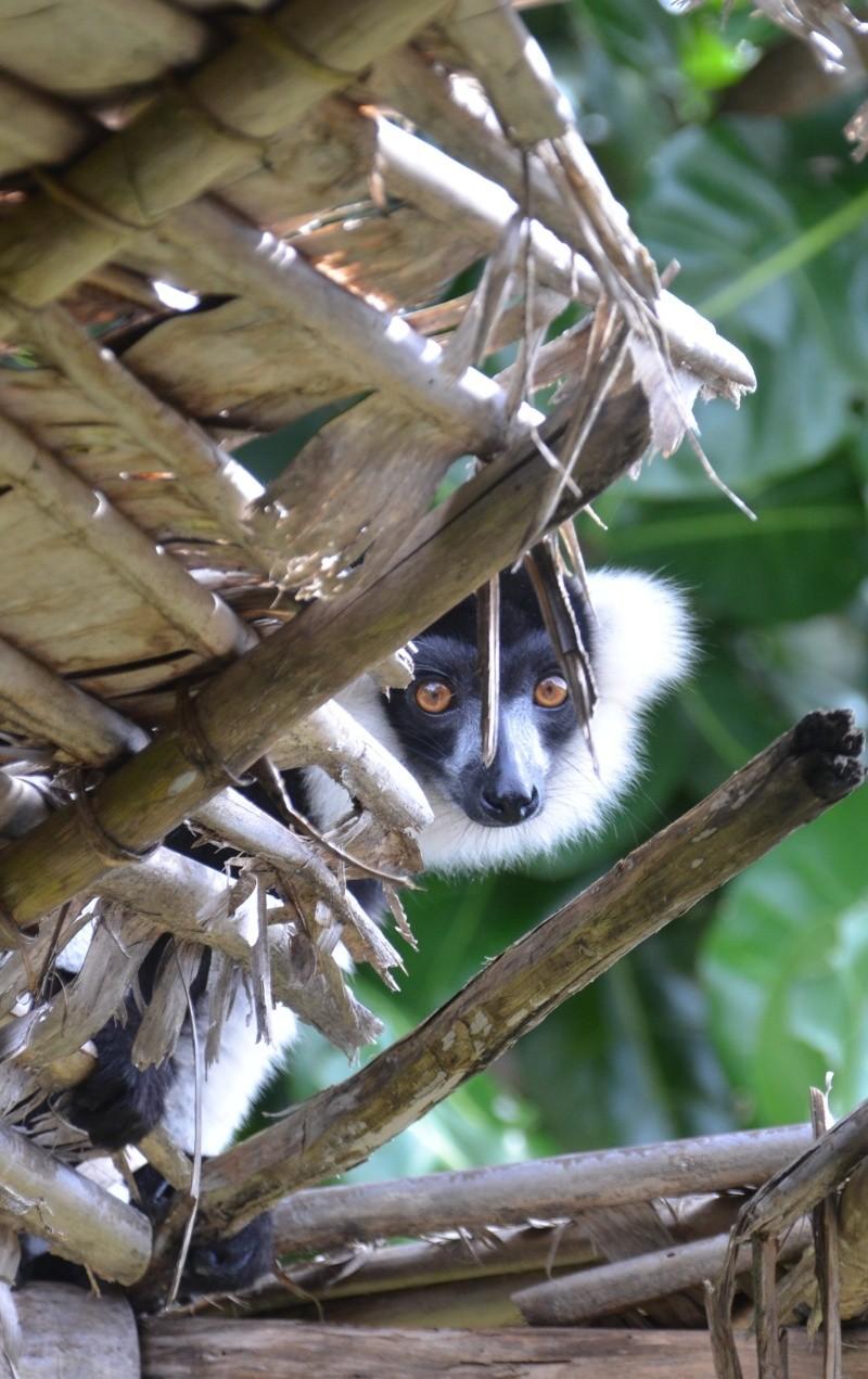 [Madagascar] Souvenir de l'ile St Marie 210
