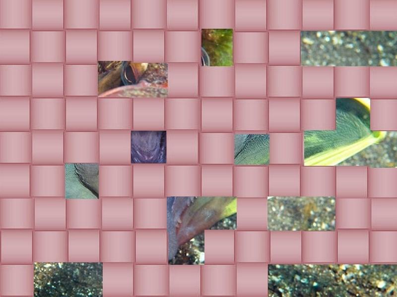 un animal - blucat - 31 août trouvé par martine - Page 2 Animal18